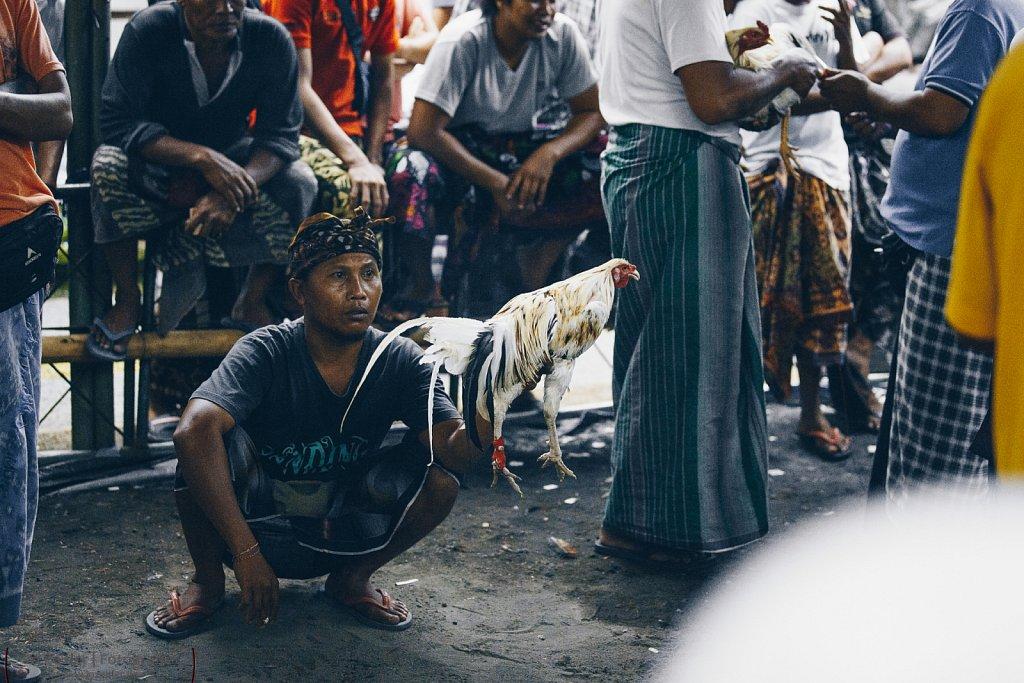 Hahnenkampf in Ubud auf Bali